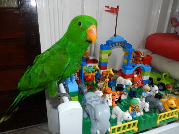 als de vogels leren spreken